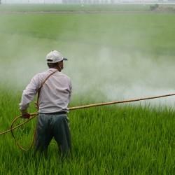 herbicidegmo