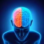 Vitamins for Brain Health